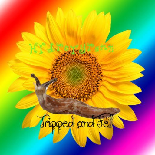 Sunflower Slug